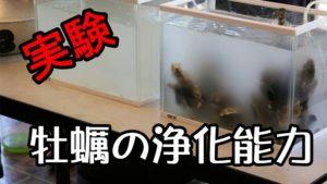 牡蠣の浄化能力が凄い!宮島牡蠣打ち見学
